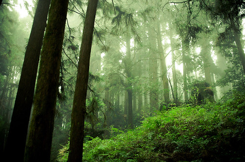 Forests of Alishan-2