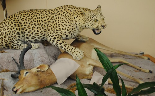 The Only Thing the Leopard Understands: The Crime of Murder