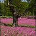 pink ... by John FotoHouse