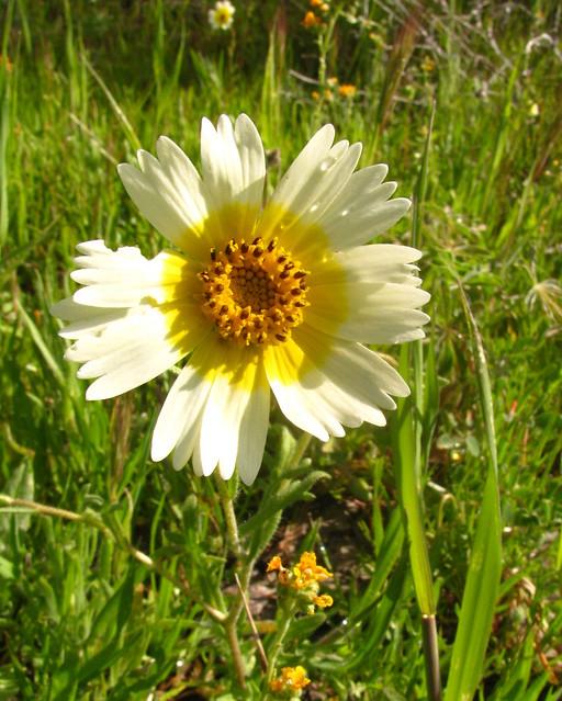 Tidytips Flower