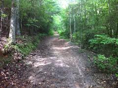 Whitecliff Road