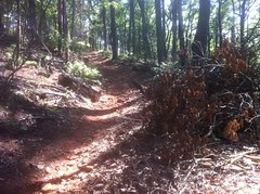 Jones Creek Ridge