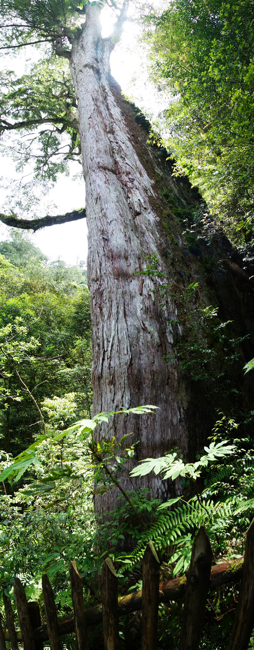 巨木群,與往拉拉山的路上-056