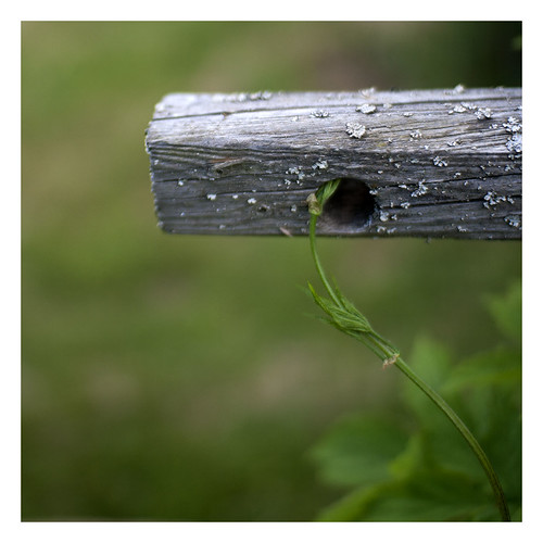 wood old plant detail green square focus dof country depthoffield pointofview