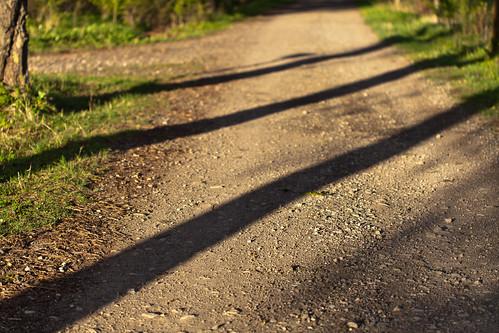 trees sunset shadow sun canon germany deutschland thüringen thuringia sonne bäume schatten sonnenstrahlen ef100mmf28macrousm eichsfeld canoneosd canoneos5dmarkii