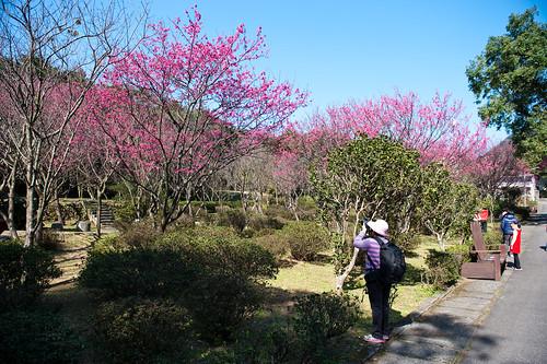 陽明山花卉試驗所-3