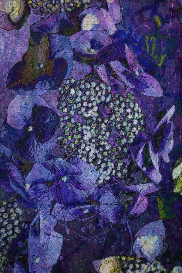 20150623_6904-blue-hydrangea-copy-w