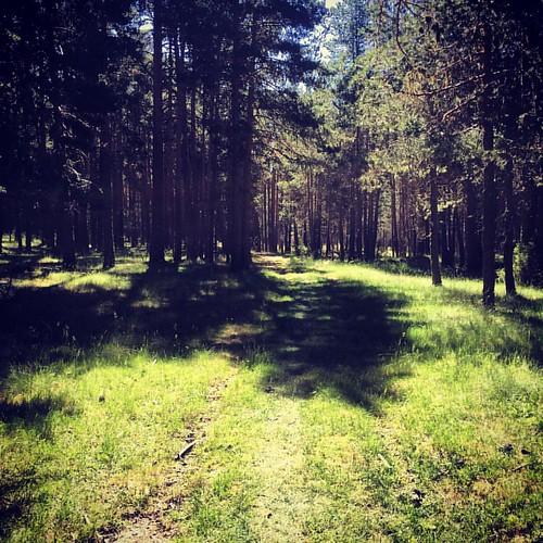 Bosques de Bronchales (Teruel).
