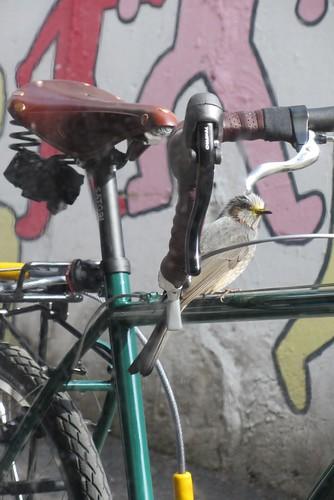 Birds all over Django!