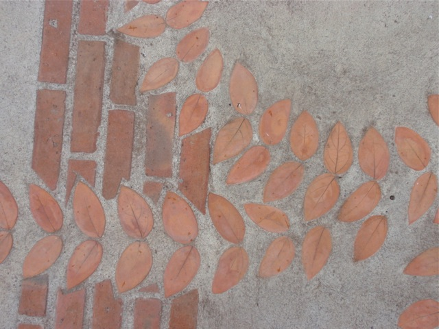 pavement leaves