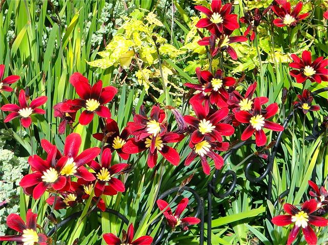 garden patch flickr photo sharing