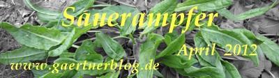 Garten-Koch-Event April 2012: Sauerampfer [30.04.2012]