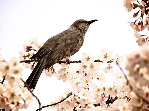 Spring in festive mood