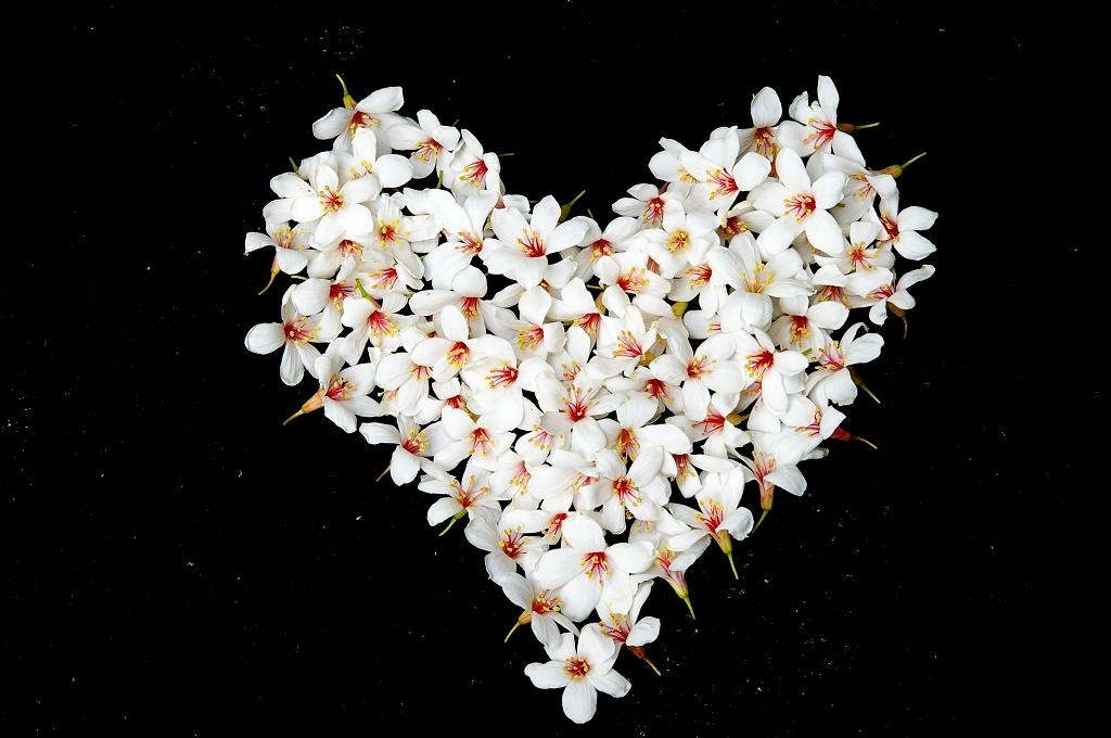 油桐油桐我愛你