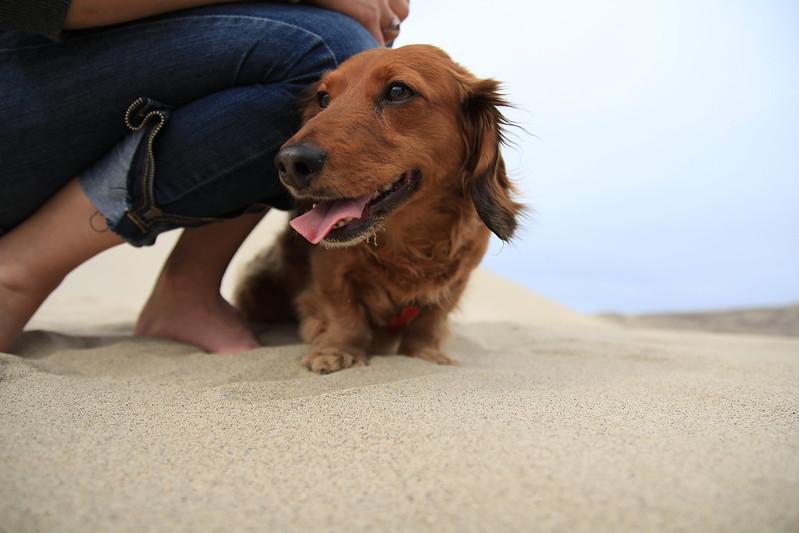 Puppy at Dunes