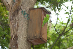 branch, tree, birdhouse, fauna, bird feeder, bird, wildlife,