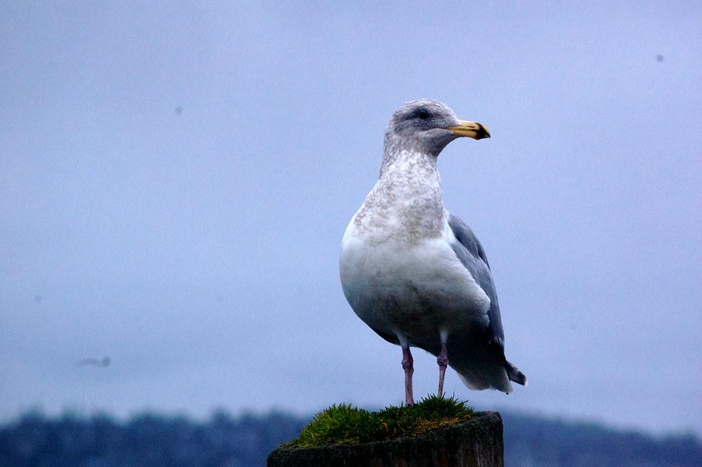 Seabeck, Washington - Wikipedia