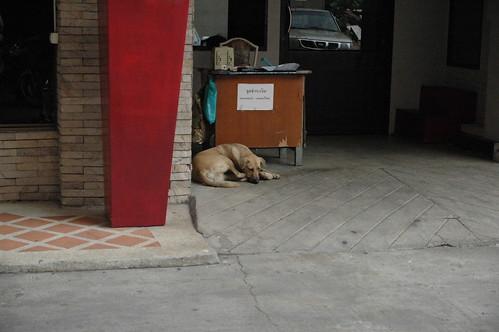 ホテルの裏にも犬