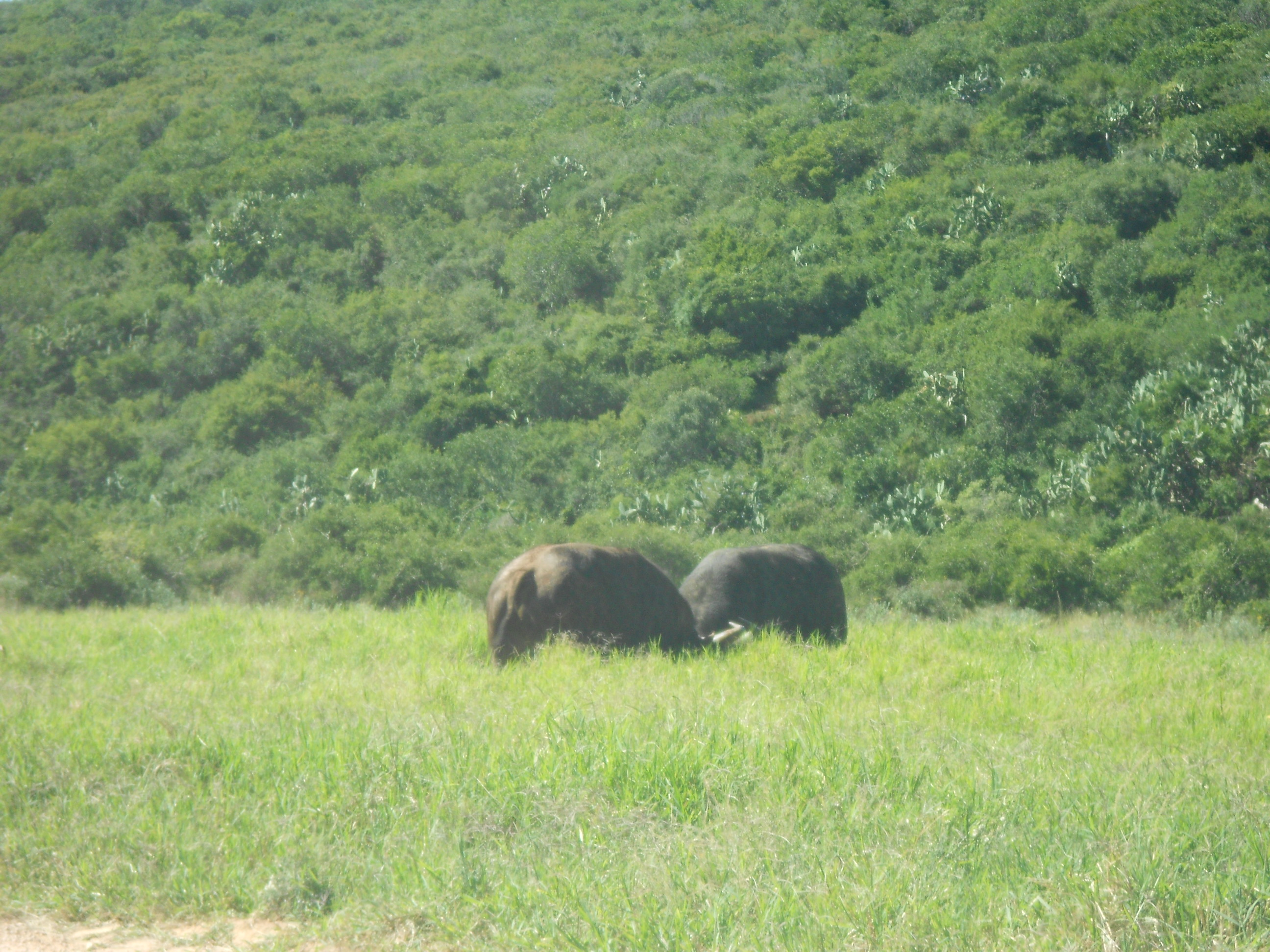 Addo Elephant National Park, Eastern Cape