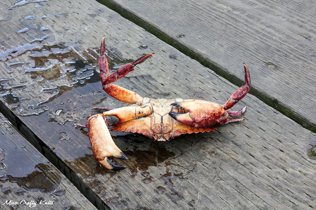 Upside Down Crab