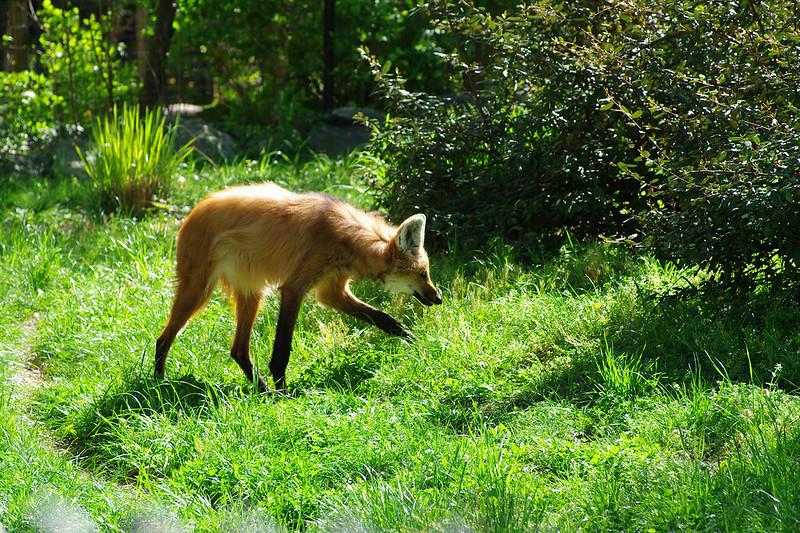 美國華盛頓特區國家動物園動物寫真