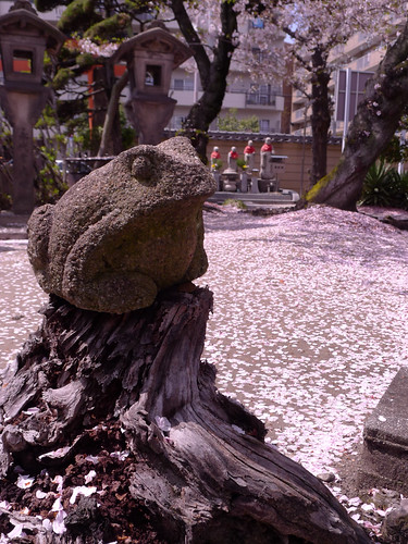 Frog's statue and mark of rain of blossoms.