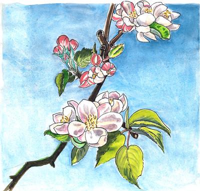 Apple blossoms in the wind - Pommier en fleurs dans le vent by alain bertin