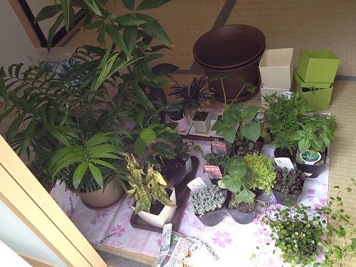 観葉植物の植え替え-02