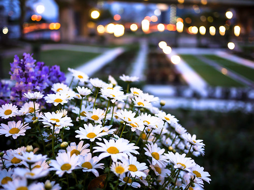 flowers at Nakanoshima park by hyossie