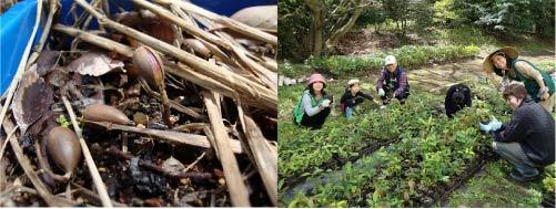 いのちの森 明治神宮の森から未来の森を創り三陸の漁場を復活させようプロジェクト_01