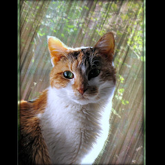 """""""What greater gift than the love of a cat.""""  ― Charles Dickens"""