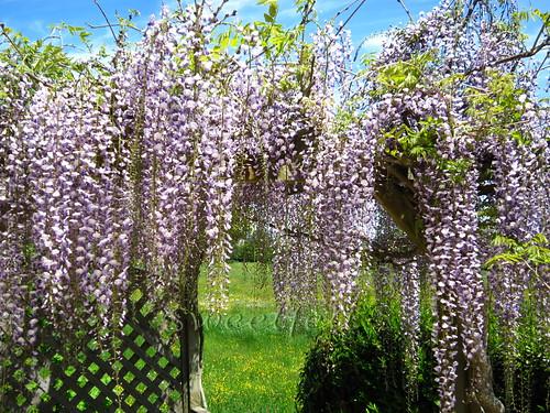 ♥♥♥ A Primavera no meu jardim! Feliz Quinta das Flores!! by sweetfelt \ ideias em feltro