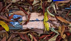 dead leaves on wooda
