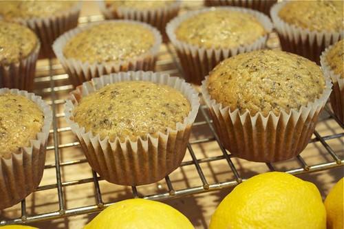muffins/lemon chia seed 20