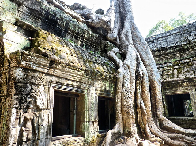 巨木に浸食されるタ・プロームの遺跡