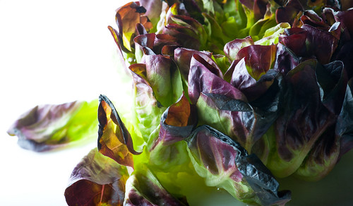 Red-Butter-Lettuce