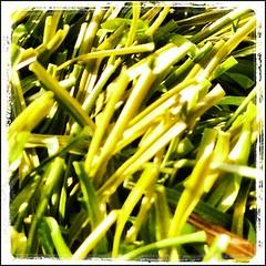 May 14 - Grass