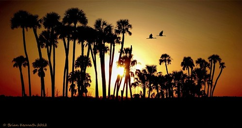 sunset florida palmtrees sandhillcranes centralflorida sabalpalmetto cabbagepalms