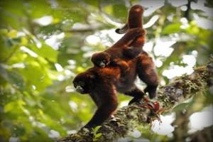 especies-valle-chilchos-amazonas-peru