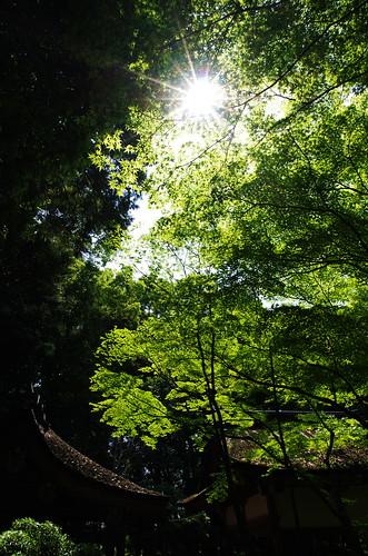 上賀茂神社 #2