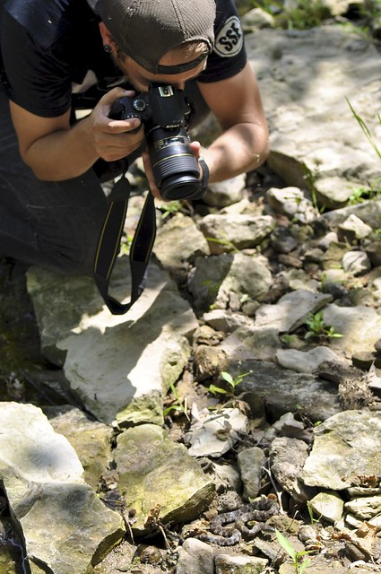 Photographing a Northern Water Snake