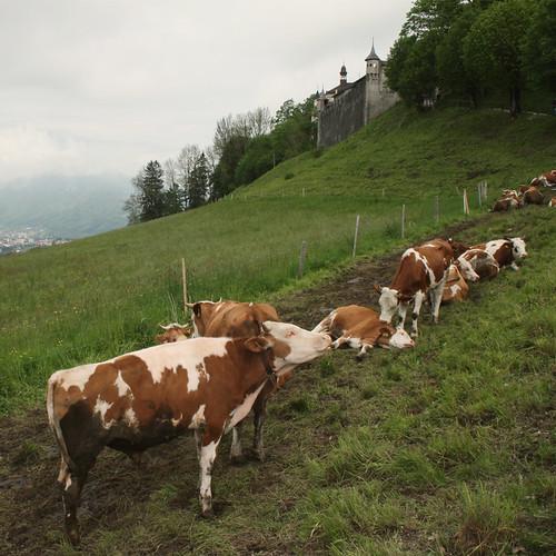 Suisse3
