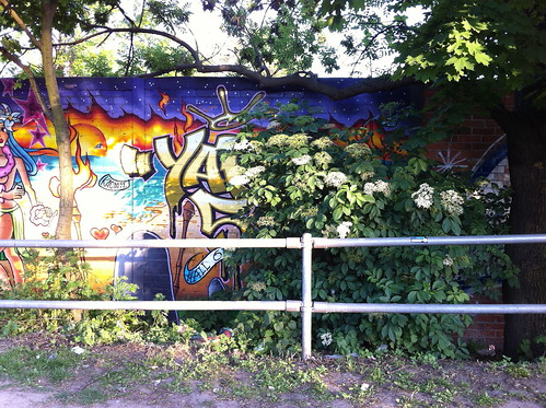 Elderflower bush by graffiti mural