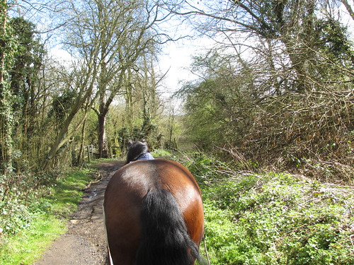 The view from a long-reining session down the bridlepath