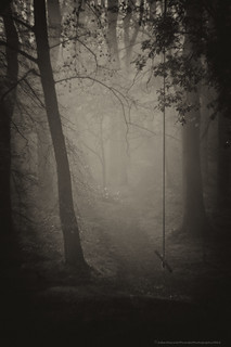 Petzval lens - spooky misty wood - 20140422 Featherdown Farm DSC_3522-Edit.jpg