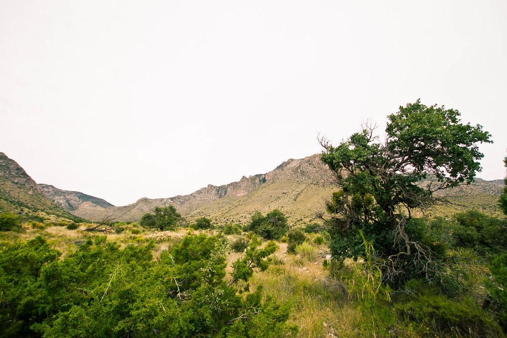Texas Way-12