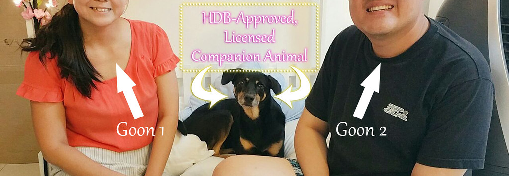 HDB-approved singapore dog project adore