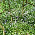 flowers in ouston woods