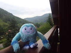 yeti at the chalet