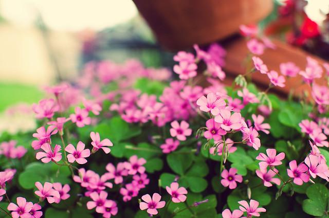 spring05
